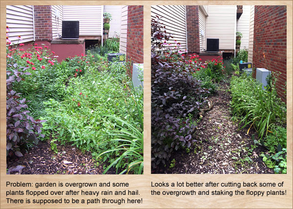 Gardenn maintenance may include cutting back and staking plants