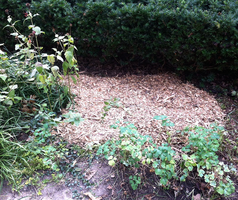 Wood chip mulch protects the lasagna gardening area until I'm ready to plant.