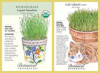 Oat Grass and Wheat Grass