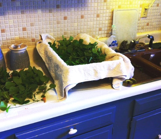 Herb washing and drying station